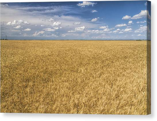 Ready To Harvest Canvas Print