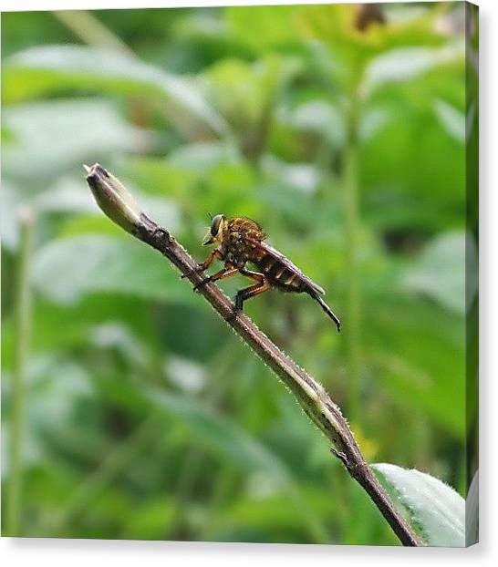 Grasshoppers Canvas Print - Ready To Jump by Bimo Pradityo