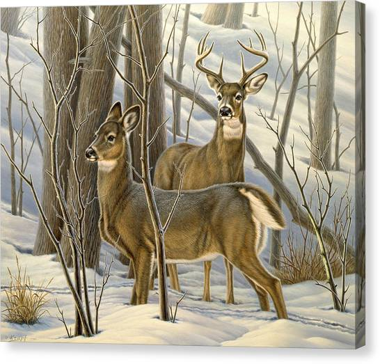 Deer Canvas Print - Ready - Whitetail Deer by Paul Krapf