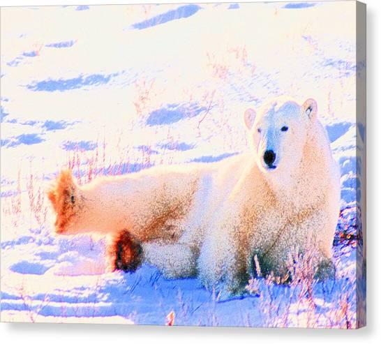 Reclining Polar Bear Canvas Print