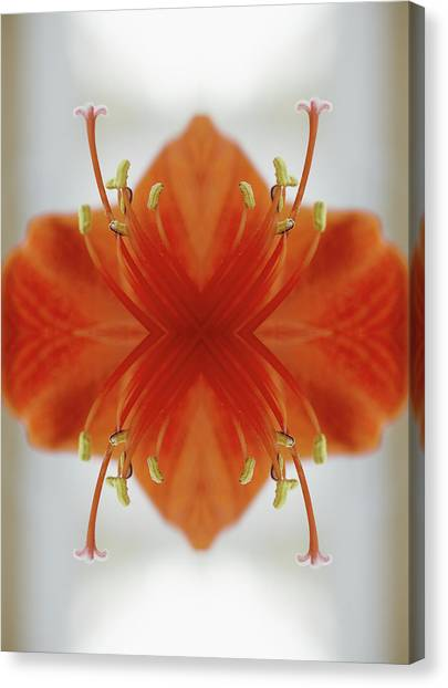 Red Amaryllis Flower Canvas Print by Silvia Otte