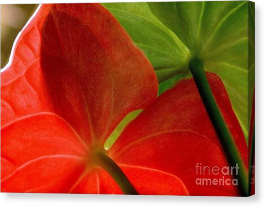 Red And Green Anthurium Canvas Print