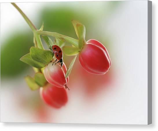 Ladybugs Canvas Print - Red And Green by Ellen Van Deelen