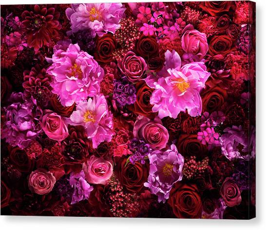 Red And Pink Cut Flowers, Close Up Canvas Print by Jonathan Knowles