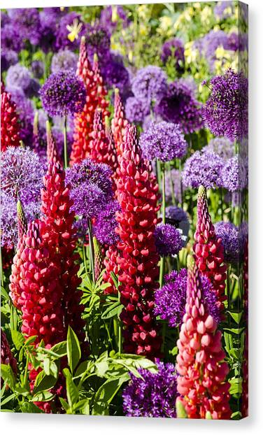Red And Purple #1 Canvas Print by Gerry Walden