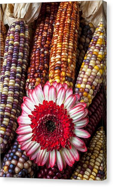 Indian Corn Canvas Print - Red And White Mum With Indian Corn by Garry Gay