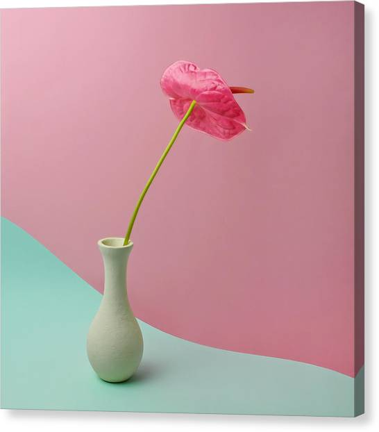 Red Anthurium In White Vase Canvas Print by Juj Winn