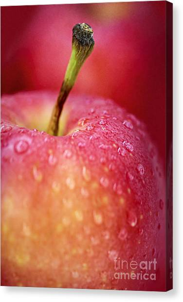 Fruit Canvas Print - Red Apple Macro by Elena Elisseeva