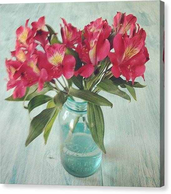 Background Canvas Print - Red Astramaris Flowers by Kay Pickens