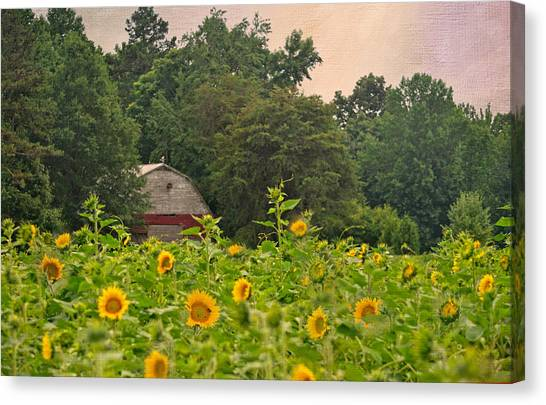 Red Barn Among The Sunflowers Canvas Print