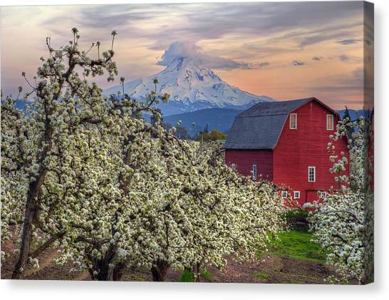 Red Barn In Hood River Pear Orchard Canvas Print