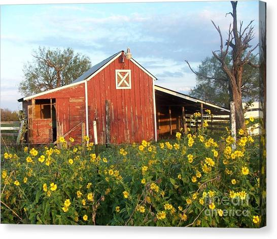 Red Barn With Wild Sunflowers Canvas Print