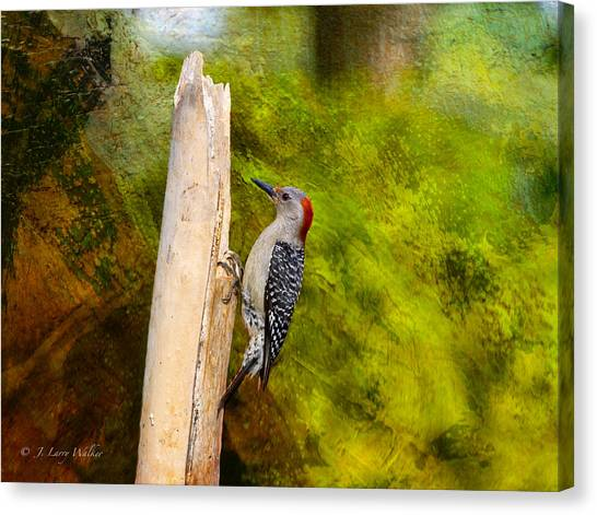 Red-bellied Woodpecker Happily Pecks Canvas Print