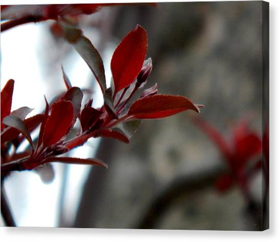 Red Blossom Canvas Print by Wild Thing