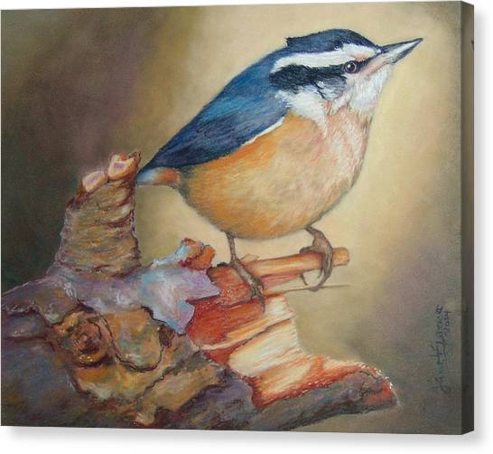 Red-breasted Nuthatch Bird Canvas Print
