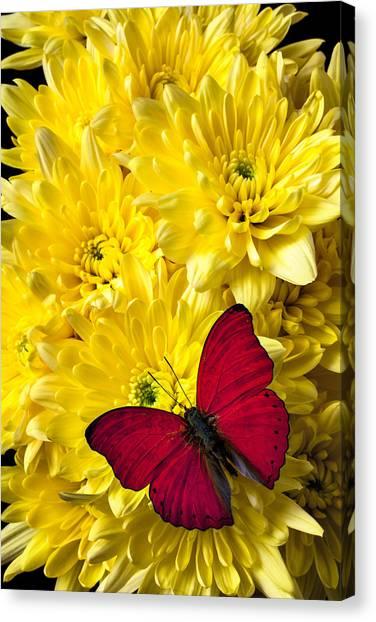 Pom-pom Canvas Print - Red Butterfly On Poms by Garry Gay