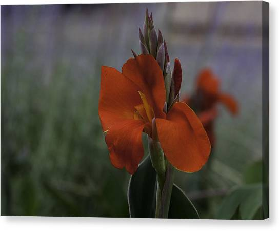 Red Canna Canvas Print by Martha Burger
