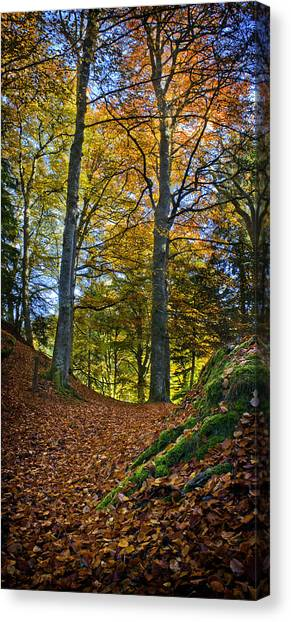 Red Carpet In Reelig Glen During Autumn Canvas Print