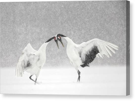 Red Crowned Crane Courtship Dance Canvas Print