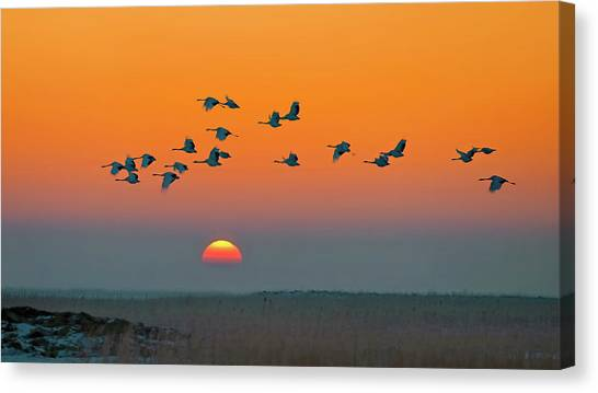 Cranes Canvas Print - Red-crowned Crane by Hua Zhu