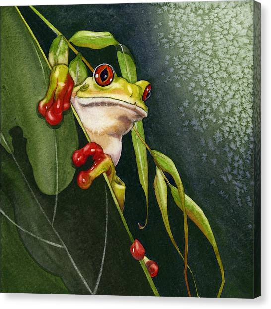 Red-eyed Frog Canvas Print