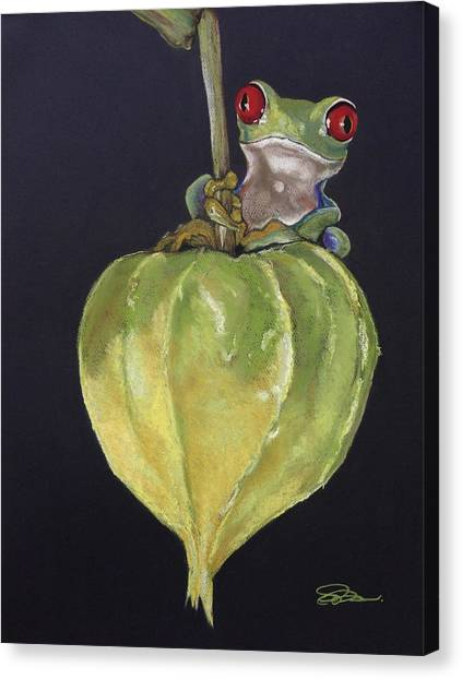 Red-eyed Tree Frog On Seed Pod Canvas Print