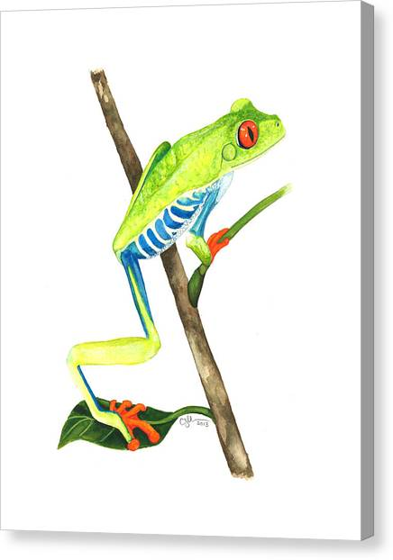 Red-eyed Treefrog From La Selva Canvas Print