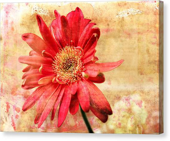 Canvas Print featuring the digital art Red Flower 2 by Helene U Taylor