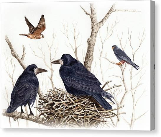Red-footed Falcon Canvas Print by Deak Attila