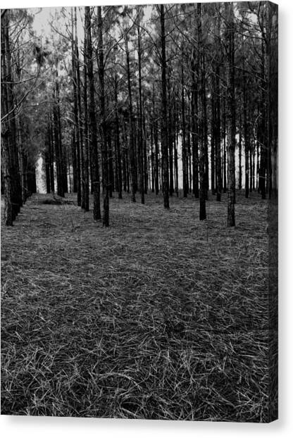 Red Forest In Black And White Canvas Print