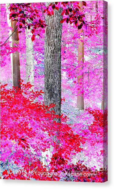 Red Forest Canvas Print by JCYoung MacroXscape
