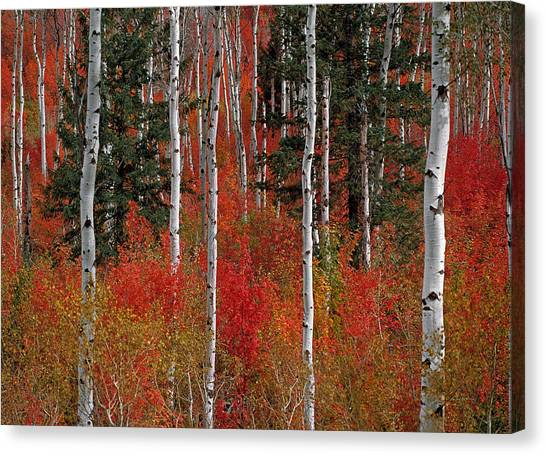 Red Forest Canvas Print by Leland D Howard