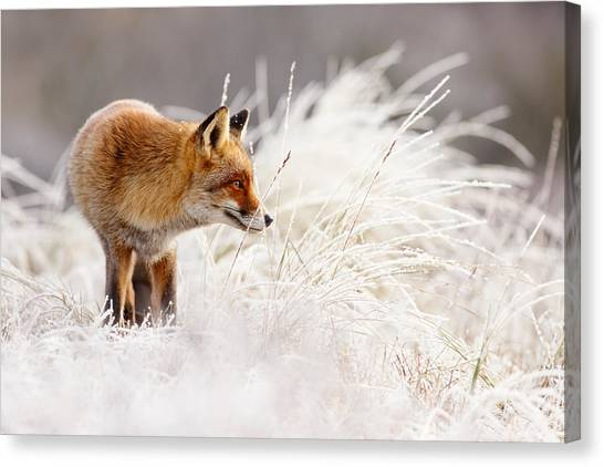 Winter Storm Canvas Print - Red Fox And Hoar Frost _ The Catcher In The Rime by Roeselien Raimond