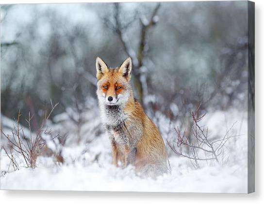 Christmas Art Canvas Print - Red Fox Blue World by Roeselien Raimond