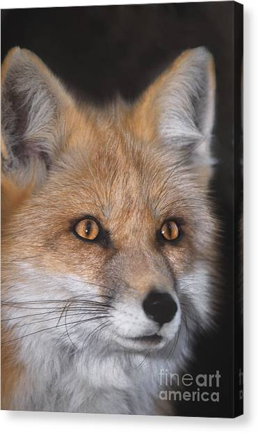 Canvas Print featuring the photograph Red Fox Portrait Wildlife Rescue by Dave Welling