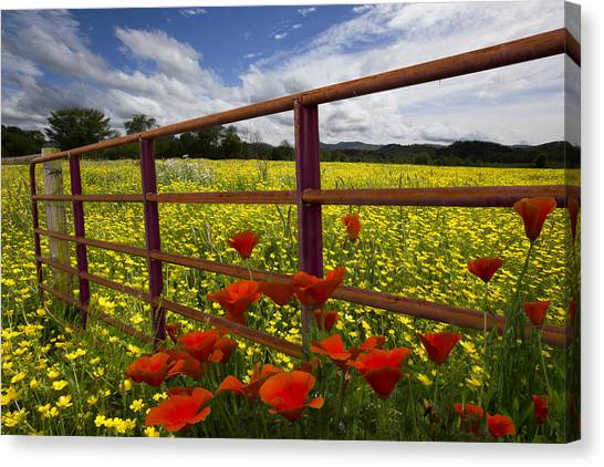 Poppys Canvas Print - Red Gate by Debra and Dave Vanderlaan