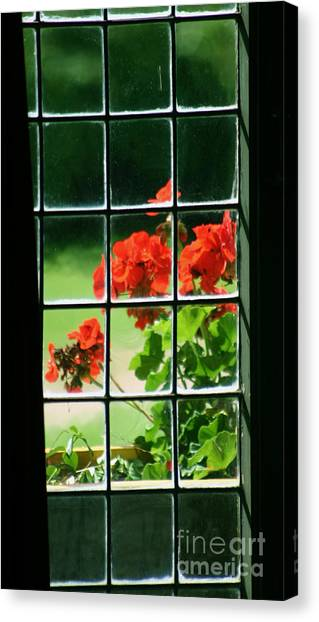 Red Geranium Through Leaded Window Canvas Print