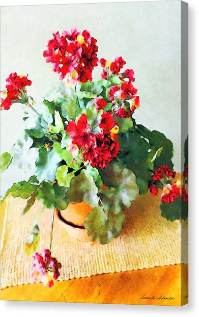 Red Geraniums Canvas Print