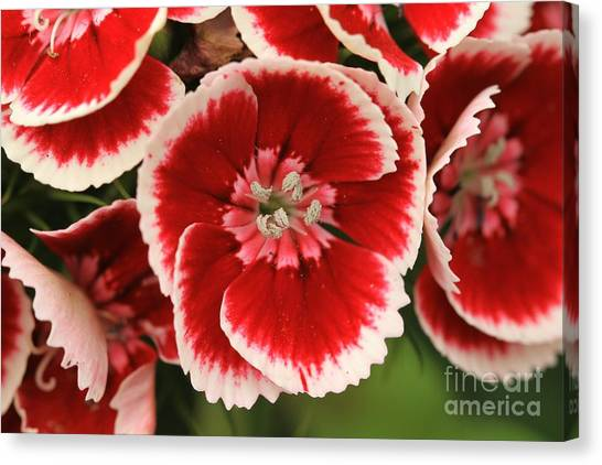 Red Glory All Profits Go To Hospice Of The Calumet Area Canvas Print