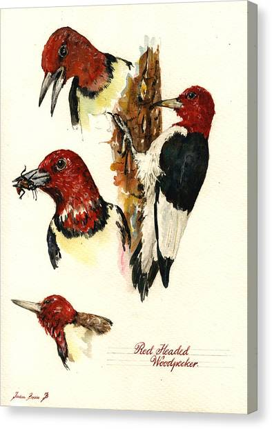 Woodpecker Canvas Print - Red Headed Woodpecker Bird by Juan  Bosco
