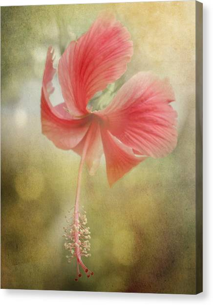 Althea Canvas Print - Red Hibiscus by David and Carol Kelly
