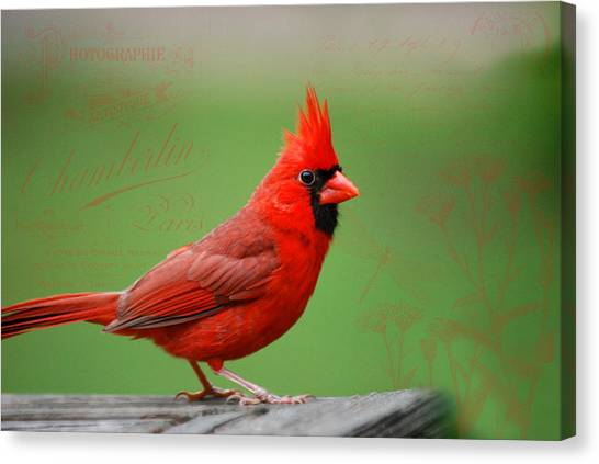 Red It Is Canvas Print