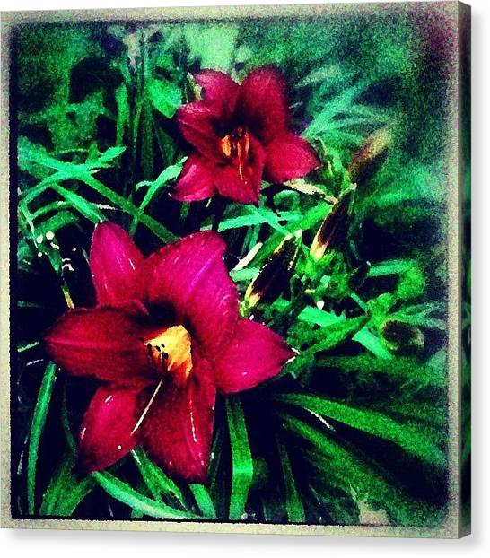 Impressionism Canvas Print - Red Jewels In The Garden by Paul Cutright