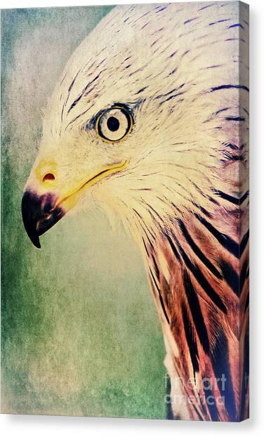 Red Kite Art Canvas Print