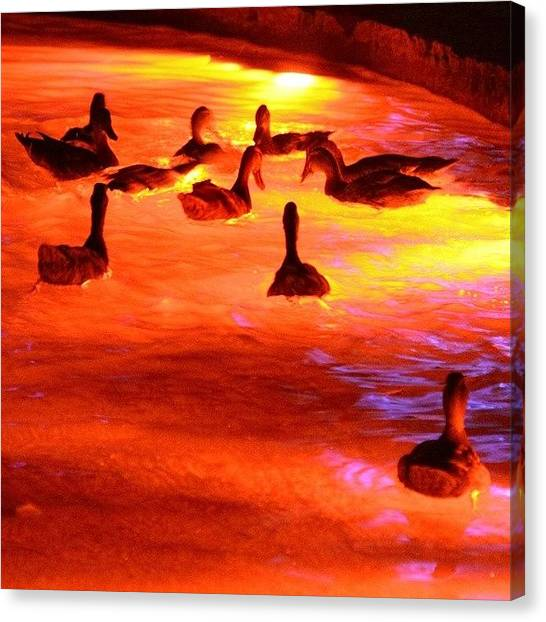 Water Birds Canvas Print - Red Lake by Emada Photos