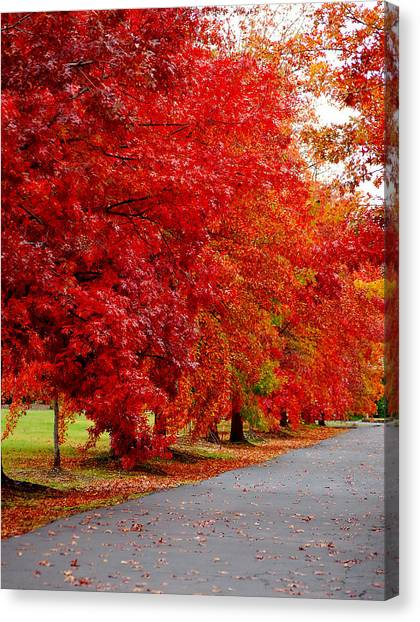 Red Leaf Road Canvas Print
