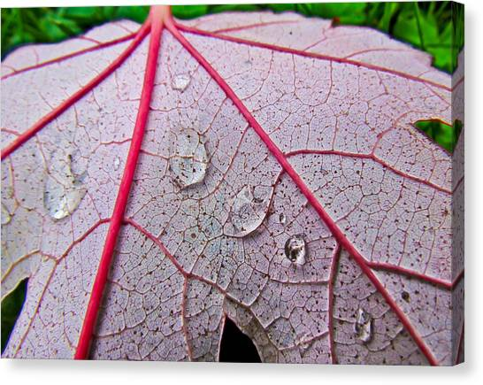 Red Leaf With Raindrops Canvas Print