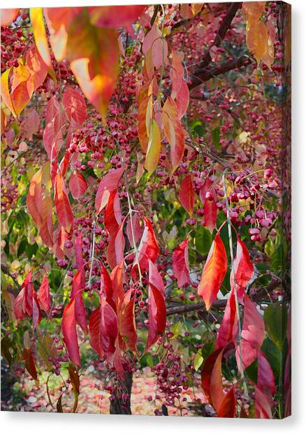 Red Leaves And Berries Canvas Print