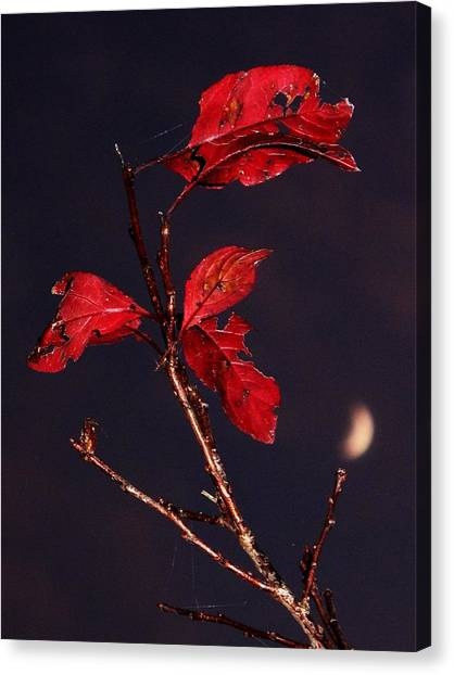 Red Leaves And Fading Moon Canvas Print