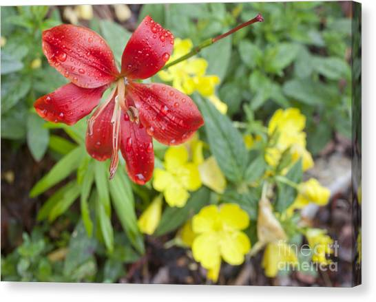Red Lily And Yellow Buttercups Canvas Print by Jonathan Welch
